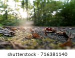 forest trail ground | Shutterstock . vector #716381140