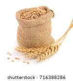 wheat spike and wheat grain in... | Shutterstock . vector #716388286