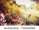 autumn garden background with... | Shutterstock . vector #716462068