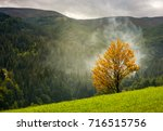Tree With Yellow Foliage In...