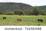 Landscape With Herd Of Cows ...