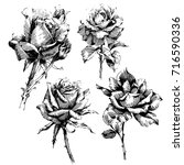 wild flowers roses isolated....   Shutterstock .eps vector #716590336