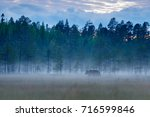 foggy forest with brown bear...   Shutterstock . vector #716599846