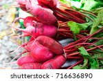bunch of red radish | Shutterstock . vector #716636890