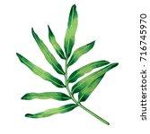 watercolor painting fern green...   Shutterstock . vector #716745970
