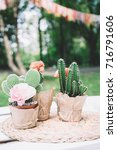 the bright cactus on the table | Shutterstock . vector #716791606