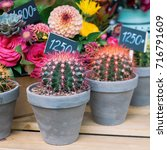 bright cactus on a background... | Shutterstock . vector #716791609