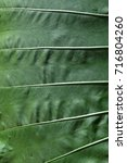 leaf surface green | Shutterstock . vector #716804260