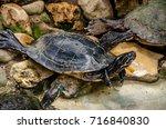 turtle   Shutterstock . vector #716840830