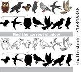 wild forest birds set to find... | Shutterstock .eps vector #716846368
