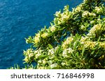 beautiful flowers on the...   Shutterstock . vector #716846998