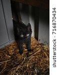 Stock photo kitten in barn 716870434