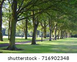 tree avenue during summer in... | Shutterstock . vector #716902348