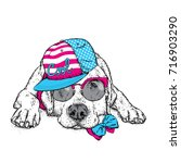 cute puppy in a cap and glasses.... | Shutterstock .eps vector #716903290
