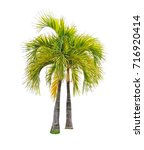 Small photo of palm tree isolated white background