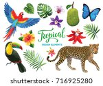 Tropical collection: exotic flowers, leaves, fruits, birds and animals. Vector design isolated elements on the white background.