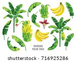 banana palm tree collection.... | Shutterstock .eps vector #716925286