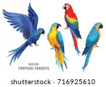tropical parrots collection.... | Shutterstock .eps vector #716925610