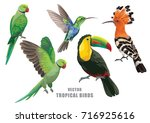 tropical birds collection ... | Shutterstock .eps vector #716925616