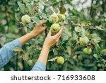 woman hand picking an apple | Shutterstock . vector #716933608