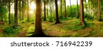 Stock photo sunrise in the forest 716942239