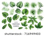 Stock vector tropical leaves collection vector isolated elements on the white background 716949403