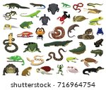 various reptile and amphibian... | Shutterstock .eps vector #716964754