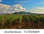 vineyards at sunset in autumn... | Shutterstock . vector #717035809