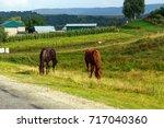 rural life  horses grazing on... | Shutterstock . vector #717040360