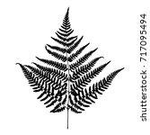 fern leaf silhouette. vector... | Shutterstock .eps vector #717095494