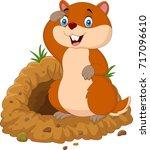 funny cartoon groundhog in...   Shutterstock .eps vector #717096610