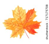 vibrant maple leaf with veins... | Shutterstock .eps vector #717175708