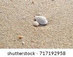 meretrix meretrix  linnaeus ... | Shutterstock . vector #717192958