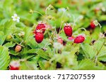 young fresh red strawberries... | Shutterstock . vector #717207559
