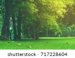 tree with filter in the park | Shutterstock . vector #717228604