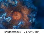 texture of the sea anemone... | Shutterstock . vector #717240484