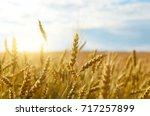 Wheat Field Sunny Day Under...