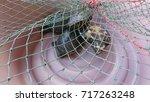 Tortoise Imprisoned