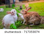 rabbits eating leaves in the... | Shutterstock . vector #717353074