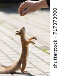 Small photo of red squirrel on a branch in summer, Sciurus, park