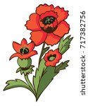 flower red poppy on white... | Shutterstock .eps vector #717382756
