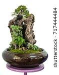 gardening tray damp in a pot ... | Shutterstock . vector #717444484