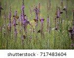 monarch butterflies group... | Shutterstock . vector #717483604