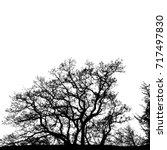 realistic tree silhouette ... | Shutterstock . vector #717497830