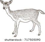 Sketch Of A Young Deer