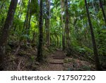 rainforest filled with palm... | Shutterstock . vector #717507220