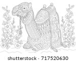 coloring page of camel sitting... | Shutterstock .eps vector #717520630