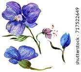 wildflower orchid flower in a... | Shutterstock . vector #717522649