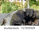 old log in the yard of the... | Shutterstock . vector #717525529