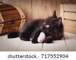 Stock photo beautiful black cat with green eyes lying on wooden background cat playing with toy 717552904